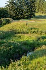 Harburn 0618 12th from Tee (Jistfoties) Tags: golf golflandscapes harburngolfcourse harburngolfclub landscapes westlothian