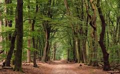 Trees (Guido de Kleijn) Tags: speulderbos trees veluwe guidodekleijn nikond500 nikon1680f28 forest tree woods