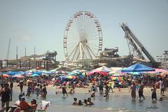 the heat is on (Judecat (back on the farm)) Tags: crowded ocean wildwood newjersey jerseyshore ferriswheel beachumbrellas