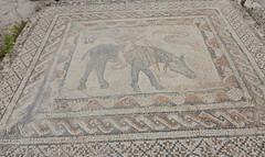 Mosaics, Volubilis (Mulligan Stu) Tags: berber romanruins unesco morocco unescoworldheritagesite mosaics roman maroc volubilis