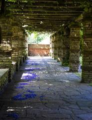 Blue Petals, Well Hall Pleasaunce (London Less Travelled) Tags: uk unitedkingdom england britain london southlondon eltham city urban park greenwich pleasaunce blossom petal blue colour