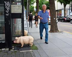 Pedestrian and Pig (Mondmann) Tags: sinsadong seoul korea sinsa pig pedestrian sidewalk street streetphotography man korean walking southkorea rok republicofkorea asia eastasia mondmann fujifilmx100s statue pigstatue