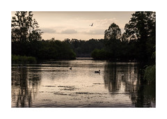 Etang au coucher de soleil-5699125A5699 (helenea-78) Tags: canard coucherdesoleil monochrome oiseaux oiseau bird water eau plandeau lac etang sunlight sunset paysages paysage nature