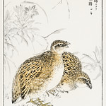 Japanese Quail and Gentian illustration from Pictorial Monograph of Birds (1885) by Numata Kashu (1838-1901). Digitally enhanced from our own original edition. thumbnail