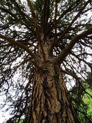 Tree pose (1346) (lnmp_ny) Tags: washington wenatchee swakanecanyon swakaneroad cashmere