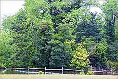 Trees (brianarchie65) Tags: kingstonuponhull balcony lighting trees lake bridge eastparkbridge cityofculture water grass canoneos600d geotagged brianarchie65 unlimitedphotos ngc flickrunofficial flickr flickrcentral flickrinternational flickruk ukflickr branches reflection reflectiononwater