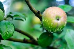 Raindrops on apple (Grzesiek.) Tags: fresh apple jabłko