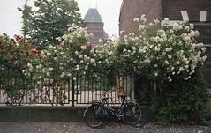 Den Haag (querido_amigo) Tags: analog trip travel film agfa pentax
