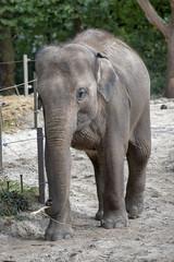 180718_010_3077 (123_456) Tags: zoo diergaarde blijdorp rotterdam netherlands
