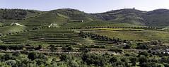 DOURO, PORTUGAL (monilague) Tags: vã©rification douro portugal vignoble wineward oliveraie rivière river montagnes colline hills montain ciel sky nuage clouds olive groves sentier trail