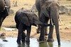 Watering hole at the ritz (SusanKurilla) Tags: wildlife africa kenya tanzania wild safari adventure elephant water baby