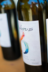 Los Gatos Wine Walk-28 (rachelle.haun) Tags: losgatos winewalk wine sunshine spring winery event