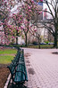Life never waits or stops, grab every moment you can (RomanK Photography) Tags: centralpark manhattan nyc newyorkcity bench blooming nature sonyalpha spring trees