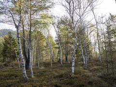 P4220093 (turbok) Tags: bäume landschaft wald c kurt krimberger