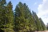 Spruce forest (talaakso) Tags: finland forest gemeinefichte gewöhnlichefichte harilikkuusk hausjärvi häme kantahäme kevät metsä rotfichte rottanne skog terolaakso finnishforest gran granskog kevätmaisema kuusi kuusikko kuusimetsä landskap norwayspruce springlandscape spruce spruceforest talaakso