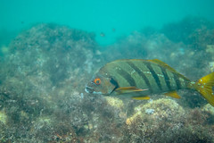 20180422-DSC_0144.jpg (d3_plus) Tags: landscape d700 nature fish marinesports apnea zoomlense 185mm izu sea port j4 skindiving 自然 nikon1 景色 風景 魚 ニコン1 watersports wpn3 drive daily マリンスポーツ japan fishingport ニコン 50mmf18 50mm dailyphoto nikonwpn3 nikon 素潜り ウォータープルーフケース 水中 nikkor sky スキンダイビング nikon1j4 漁港 underwater 海 snorkeling nikond700 地形 scenery 息こらえ潜水 ズーム 1nikkor185mmf18 eastizu 185mmf18 空 日本 東伊豆 waterproofcase シュノーケリング diving