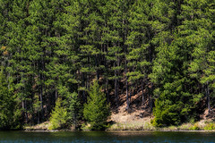 'Lunch on the Boat' (Canadapt) Tags: lake pine trees slope hill forest keefer canadapt