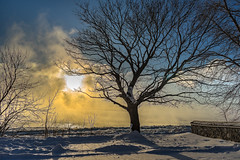 ile 2018-101 (Tasmanian58) Tags: tree fog cloud winter ice sunrise snow vintagelens lens vintage zeiss distagon25 distagon 25mm sony a7ii orleansisland quebec canada stjean