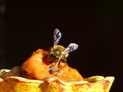 B&B Caf'e (nannyjean35) Tags: insect bee bird feeder