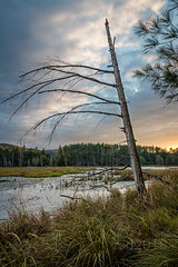 Quincy Bog, Plymouth, New Hampshire (richarddonham) Tags: bog water newhampshire lowlight