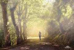 Paseando (José Luis Pérez Navarro) Tags: landscape cantabria spain fotomontaje niebla fog light trees forest arboles bosque airelibre joseluisperez blacky2007 nikon walk paisaje cobreces cantabriainfinita paseo caminar photomontage