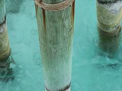 IMG_4704 (Man O' World) Tags: baha mar nassau bahamas beach turtle resort
