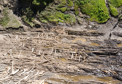 My Cat's Name is Maceo (dtman04) Tags: quebec waterfall driftwood maceo jim jose alice whothefckisalice québec montmorencyfalls chute spelling man janesaddiction