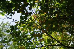 JLF17903 (jlfaurie) Tags: jardin garden bagatelle paris france francia parc parque 22072018 mpmdf jlfr jlfaurie mechas roseraie fleurs roses rosas