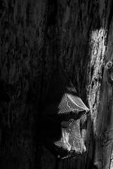 Venezia // Murano // Burano (ma_ria_mirabella) Tags: bw blackandwhite blackandwhitephoto blackandwhiteperfection bnw art mood lines stripes perspective stories geometric italy italia people venezia venice travel