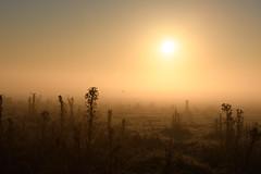 Cañuelas, Buenos Aires Argentina (paiasoloco) Tags: sunrise morning amanecer bruma d500 nikon 70200mm