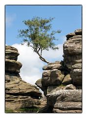 The Lone Tree (Brimham Rocks) (47mki) Tags: brimham rocks lonetree yorkshire sandstone canon760d 18135stm