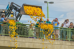 rubber ducks (stevefge) Tags: 2018 deutschland duitsland germany heidelberg festival yellow bridges people street candid unsuspectingprotagonists reflectyourworld rubberducks