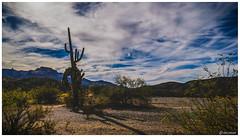 Large Saguaro Cactus (Ken Mickel) Tags: arizona cacti cactus clouds cloudscape cloudy desert joshuatreeparkway kenmickelphotography landscape landscapedesert outdoors plants saguaro sky nature photography congress unitedstates us