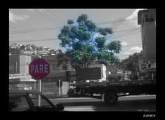 A tree in the middle of a road ... (Guilherme Alex) Tags: beautiful tree green cutout strange plaque stop leaves leafs busy cars citylife cityscape citycenter cityday rushhour movement truck sky clouds abstract teófilootoni minasgerais brazil mycity mylife myworld ilike like life living moldura frame walking idea exploring new blackandwhite road street buildings digitalcamera samsung dv100 houses