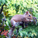 One High Squirrel