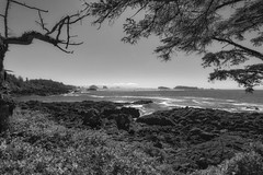 The wild Pacific Trail (Northside-Images) Tags: ucluelet canada vancouverisland britishcolumbia thepacificrimnationalpark monochrome leicacl