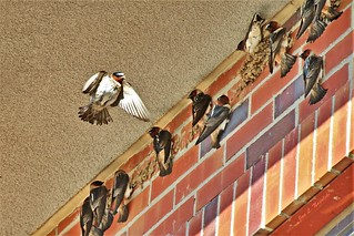 Cliff Swallow Hotel