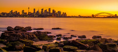 """""""It was all yellow"""" (InsanelySane26) Tags: sunset colors nature sydney sydneyharbour harbour australia travel"""