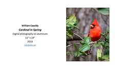 """Cardinal in Spring • <a style=""""font-size:0.8em;"""" href=""""https://www.flickr.com/photos/124378531@N04/29640288618/"""" target=""""_blank"""">View on Flickr</a>"""