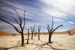 Forever (Beppe Rijs) Tags: hardap namibia natur sossusvlei afrika africa desert wüste landscape landschaft color farbe blue blau yellow gelb nationalpark nature np namib deadvlei tree baum baumstamm sand dune düne sky himmel red rot orange