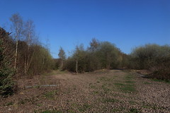 Old railway trackbed junction at Catcliffe, Sheffield  (former SDR route)   April 2018 (dave_attrill) Tags: catcliffe sheffield railway line disused trackbed remains goods sdr spur connection rotherham junction ballast april 2018 treeton sheffielddistrictrailway southyorkshire