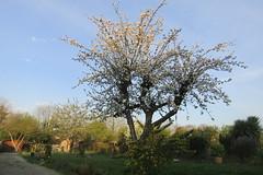 Almost summer! (*SHERWOOD*) Tags: france vendée larochesuryon home garden