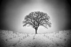Winter Tree (mckenziemedia) Tags: winter tree snow field cornfield lowkey light shadows glow luminosity sun dawn frost fog silhouette sunrise sunset ice
