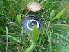 DSC03481 (classroomcamera) Tags: grass grasses green closeup sprinkler sprinklers wet water waters watering black circle circles silver grey metal metallic plastic automatic off