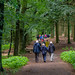 A walk in the Teutoburger Wald forest to Tecklenburg