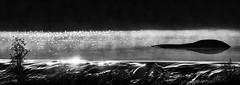 Pontemaceira (Feans) Tags: sony a7r a7rii ii fe 100400 gm rio tambre pontemaceira galiza galicia negreira
