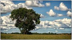 180709-1 (sz227) Tags: baum bäume tree parow natur wolken sommer sz227 zackl sony sonyilca77m2