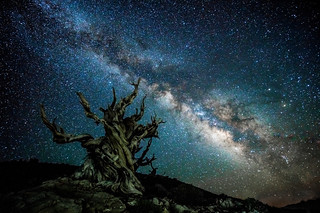 California White Mountains Astro Landscape Milky Way! High Res Sony A7RII Astro Photography Milky Way Landscape! Ancient Bristlecone Pine Forest Dr. Elliot McGucken Fine Art Photography!  Subtle Light Painting!