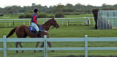 Queens Horse Wincanton (Cornishcarolin. Just moved house!! BUSY!!! xxxxxx) Tags: somerset wincantonthejockeyclubcouk horses queenshorsejockey racingcolours fence grass 1001nights 1001nightsmagiccity 1001nightsmagicwindow