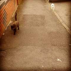 Took the dogs for a walk & the My cats wanted in on the action (donnamarie93) Tags:
